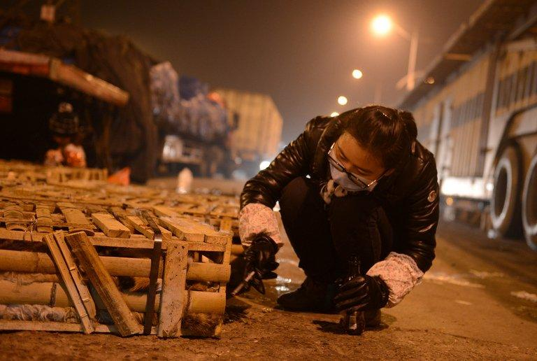 Volunteers feed caged cats on January 15, 2013 after about 600 of the animals stuffed into wooden crates and destined for dinner plates in southern China were rescued by animal protection volunteers after a truck crash. Volunteers hauled the felines from the lorry on Monday after the accident in the central city of Changsha, said Xu Chenxin of the Changsha Small Animal Protection Association