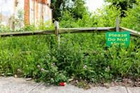 Ecologist Christopher Swan and his team planted this garden on a vacant lot in Baltimore, Maryland, showing they could turn eyesores into urban meadows