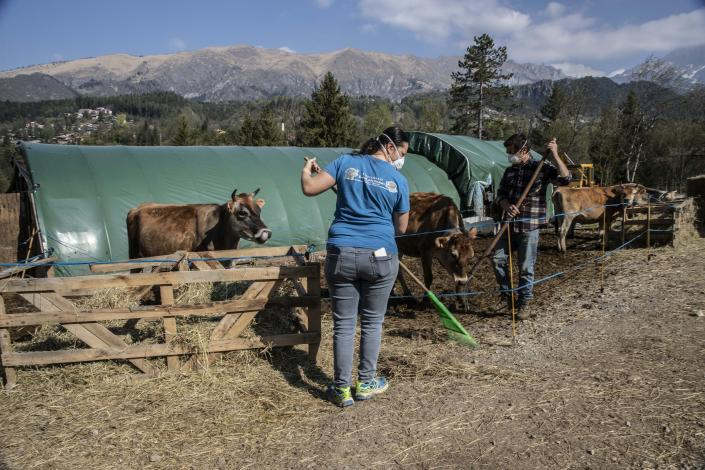 In this image take on Thursday, April 23, 2020 Stefano Gusmini, 43, and his wife Alice Piccardi, 37, left, tend to animals at their farm 'Fattoria della Felicita'' (Farm of Happiness), which hosts also a restaurant and summer camps, in Onore, near Bergamo, northern Italy. In her afternoons, Piccardi volunteers at the doctor's dormitory at a field hospital in Bergamo. (AP Photo/Luca Bruno)