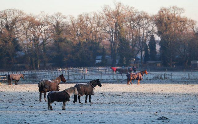 Horses stand in a frosty field near Dogmersfield in Hampshire (Andrew Matthews/PA)