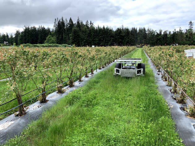 Directed Machines' Land Care Robot mows a plot of grass. (Directed Machines Photo)