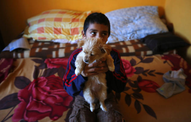 A Roma boy holds his dog in his family's apartment at the Avas apartment block in Miskolc, 180 km (112 miles) east of Budapest October 17, 2012. Spurred by desperate poverty in the nearby countryside, hundreds of destitute Romas moved into local apartment blocks in the last decade. Their presence has caused widespread friction with earlier tenants most of whom are not Roma. Complaining about what they say is a grave deterioration of public safety and insufficient government action to tackle it, the far right Jobbik party announced a big protest march on Wednesday. REUTERS/Laszlo Balogh (HUNGARY - Tags: POLITICS SOCIETY ANIMALS)