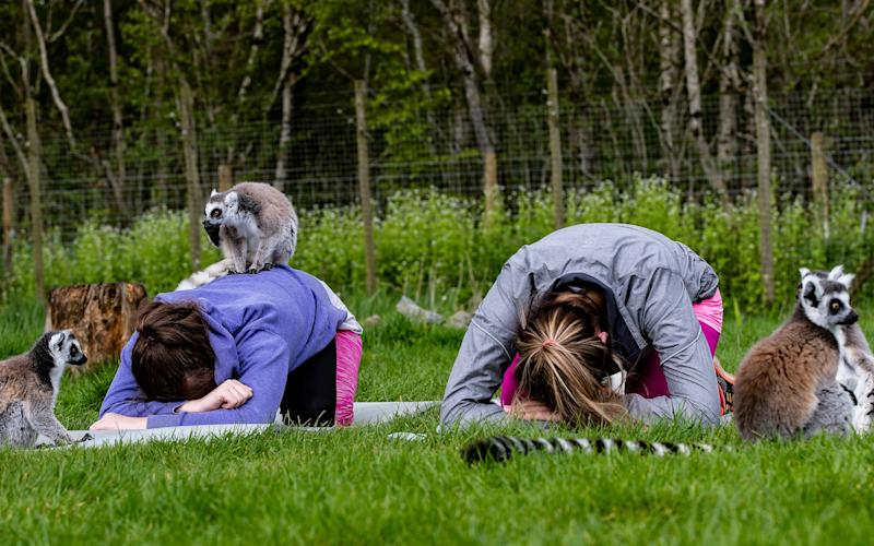 Tamsin and Charlotte were surrounded by lemurs as they practised their sun salutations - ©2019 Charlotte Graham- CAG Photography