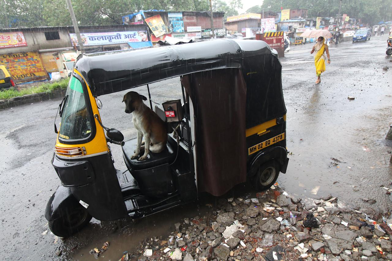 A dog takes shelter inside an auto-rickshaw during heavy rains in Mumbai, India on August 05, 2020. (Photo by Himanshu Bhatt/NurPhoto via Getty Images)
