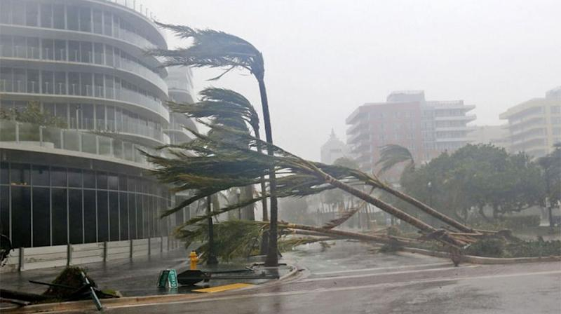 Palm trees were ripped from the ground. Source: Getty