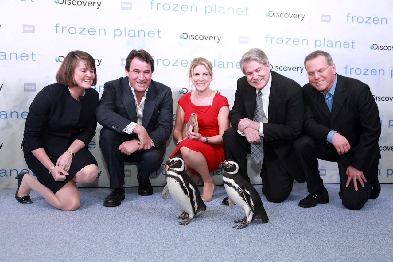 "NEW YORK, NY - MARCH 08: (L-R) Eileen O'Neill, Alastair Fothergill, Vanessa Berlowitz, John S. Hendricks and David Zaslav pose for photos with SeaWorld penguins Pete and Penny at the ""Frozen Planet"" premiere at Alice Tully Hall, Lincoln Center on March 8, 2012 in New York City.  (Photo by Astrid Stawiarz/Getty Images)"