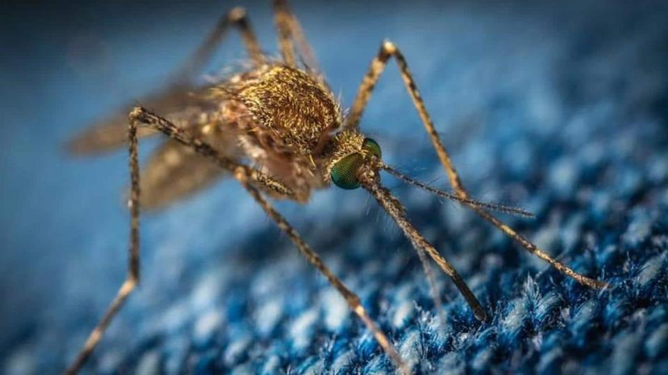 A few home remedies to get rid of mosquitoes