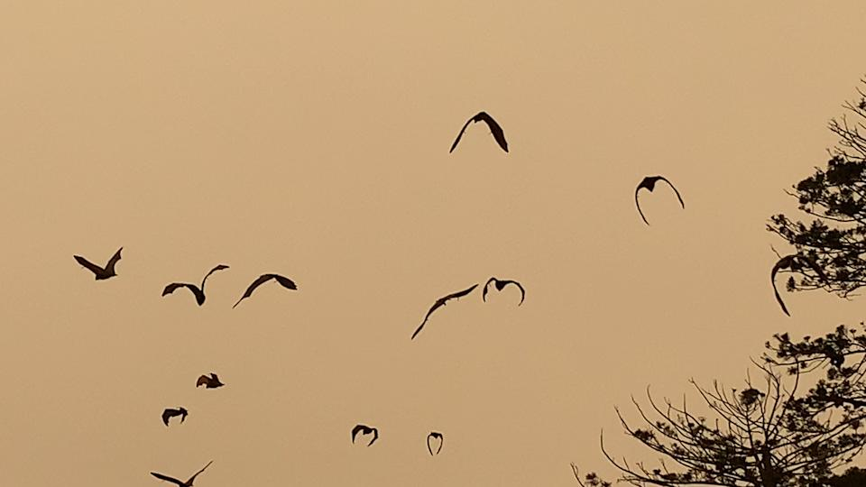 Silhouette of bats flying in the smokey sky