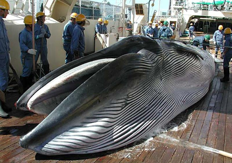 The International Whaling Commission (IWC) on Friday demanded that Japan provide more information to prove that its revised Antarctic whaling programme was for scientific research