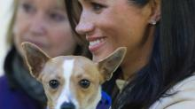 Meghan Markle's Rescue Dog BFF Already Got Adopted (and We Hope It Was by the Queen)