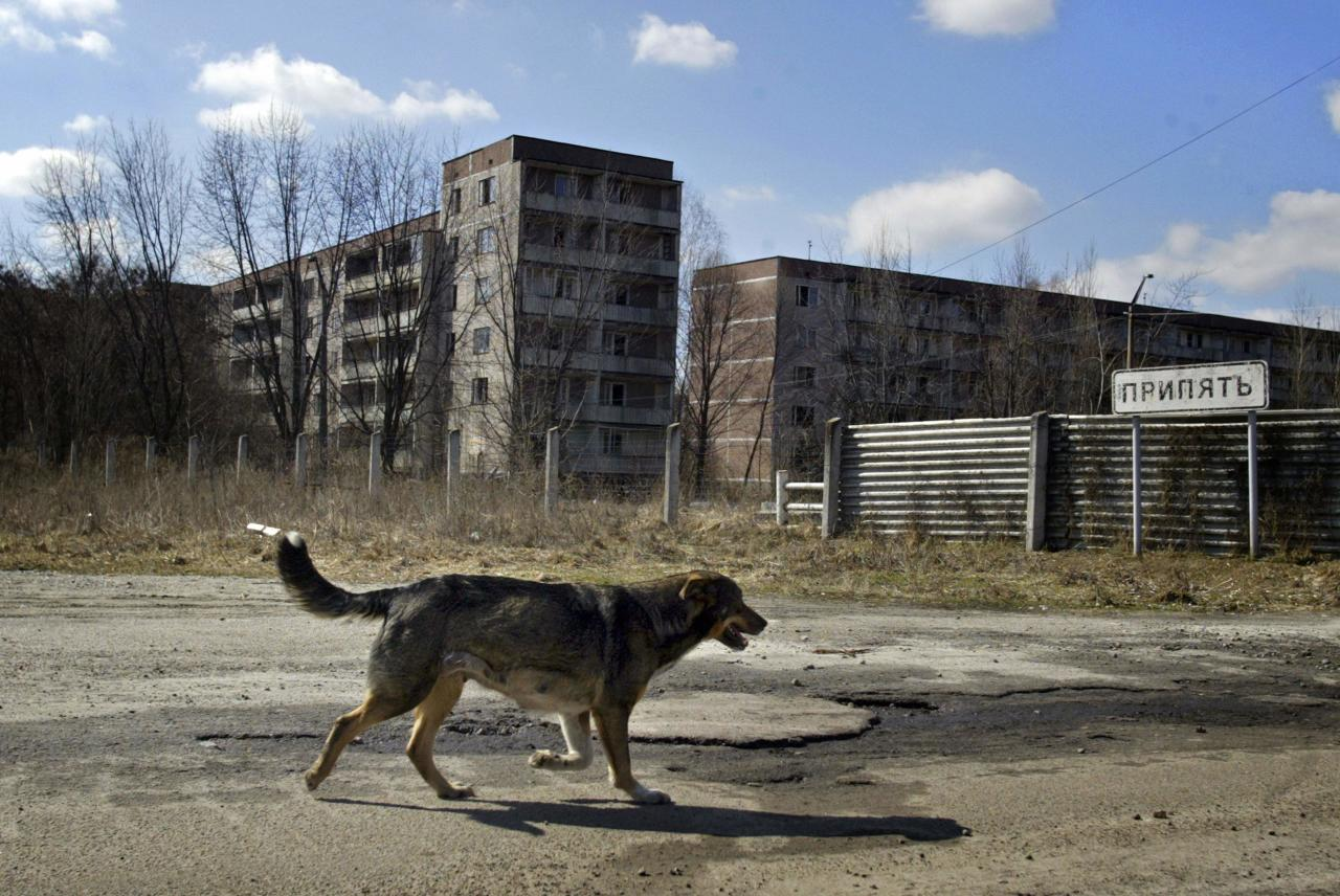 In this April 2, 2006 photo, a dog walks in the deserted town of Pripyat, Ukraine, some 3 kilometers (1.86 miles) from the Chernobyl nuclear plant. Chernobyl and Fukushima are some 5,000 miles apart but have much in common. The towns nearest to each of these stricken nuclear power stations, in Ukraine and Japan, whose disasters struck 25 years apart, already reveal eerie similarities. (AP Photo/Sergey Ponomarev) ONE OF PAIR NO. 1