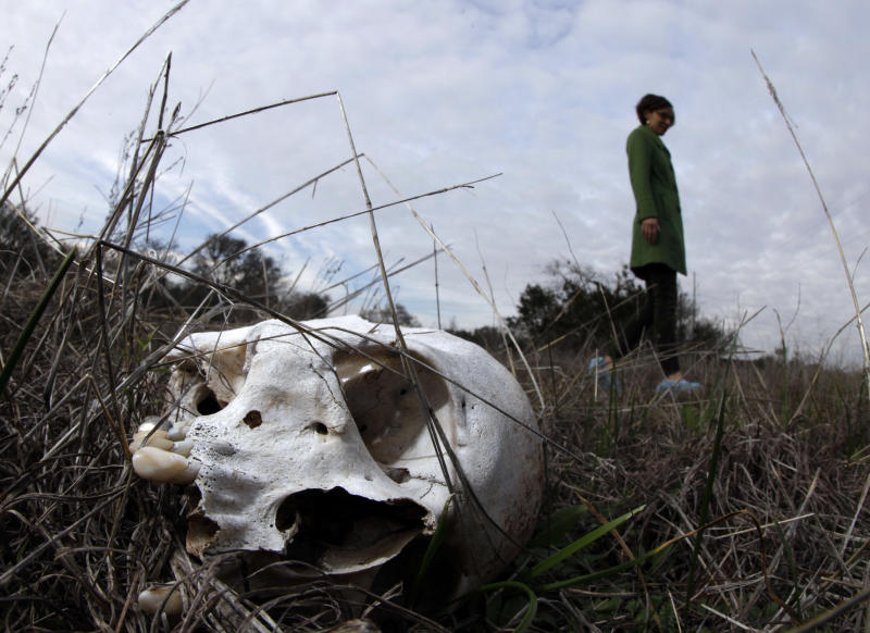 """Kate Spradley, an assistant professor at Texas State University, looks over the skeletal remains of Patty Robinson at the school's """"body farm,"""" officially the Forensic Anthropology Research Facility, Thursday, Feb. 9, 2012, in San Marcos, Texas. Robinson donated her body for research at the school. What they're finding at the research facility debunks some of what they and other experts believed about estimating time of death for a person whose remains are found outdoors and exposed to the environment. (AP Photo/David J. Phillip)"""