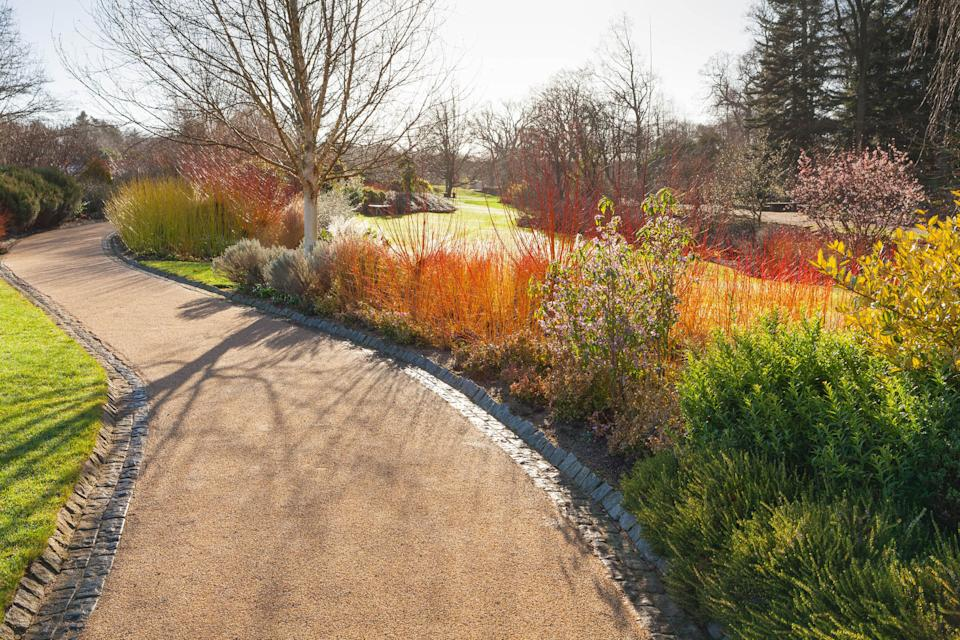winter garden jobs: borders in frost The Winter Walk RHS Garden Harlow Carr
