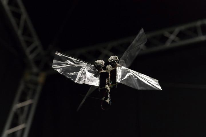 robot flaps just like a fruit fly 20180124 img 5902
