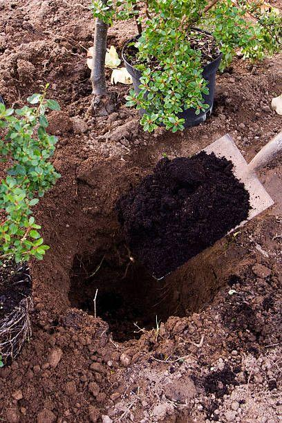 "<p>The old-school practice of adding potting soil—or peat moss—is no longer recommended, as several studies have shown that it's not helpful. In fact, it may cause drainage problems and encourage the plant's roots to stay in the hole, instead of spreading out into the surrounding ground like they should. The result is a weak tree or shrub.</p><p><strong>Fix it: </strong>When planting, dig your hole 2 to 3 times as wide, but only as deep as the container. Then set the plant in the hole and <a href=""https://s3.wp.wsu.edu/uploads/sites/403/2015/03/soil-amendments.pdf"" rel=""nofollow noopener"" target=""_blank"" data-ylk=""slk:backfill with only the soil you removed"" class=""link rapid-noclick-resp"">backfill with <em>only</em> the soil you removed</a>-- no potting soil, peat moss, or other amendments. Ultimately, your plant has to grow in the native soil, so don't baby it and turn it into a weakling.</p><p><a class=""link rapid-noclick-resp"" href=""https://go.redirectingat.com?id=74968X1596630&url=https%3A%2F%2Fwww.homedepot.com%2Fp%2FGorilla-Carts-4-cu-ft-Poly-Garden-Dump-Cart-GCG-4%2F309521793&sref=https%3A%2F%2Fwww.womenshealthmag.com%2Flife%2Fg33004348%2Fbiggest-gardening-mistakes%2F"" rel=""nofollow noopener"" target=""_blank"" data-ylk=""slk:SHOP GARDEN CARTS"">SHOP GARDEN CARTS</a></p>"
