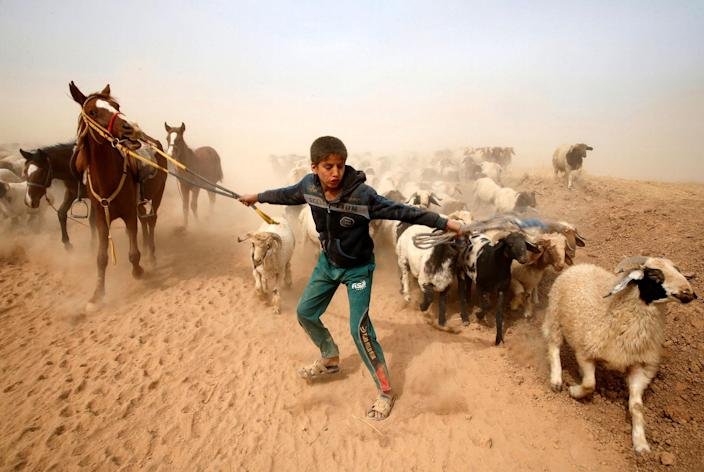 <p>NOV. 1, 2016 — A displaced Iraqi boy leads his animals to safety after escaping from Islamic State controlled village of Abu Jarboa during clashes with IS militants near Mosul, Iraq. (Ahmed Jadallah/Reuters) </p>