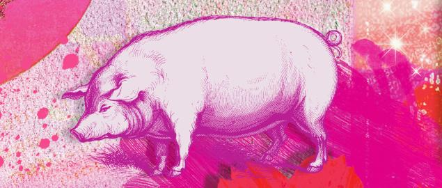 Montage of the Chinese year of the Pig