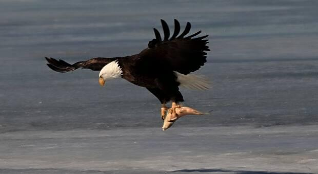 Ken Dumont said he was impressed and took about 1,800 images of the eagle because it was so close to shore.