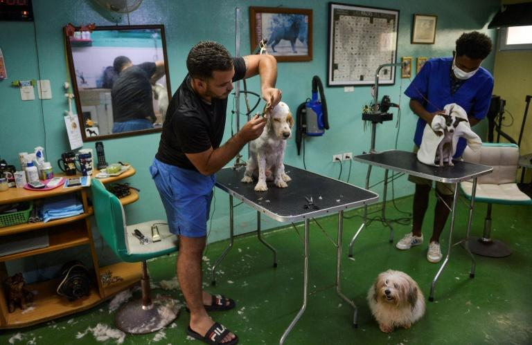 This file photo taken in 2020 shows men working with dogs at a private canine beauty salon in Havana, where a new Cuban law extends protections to most animals