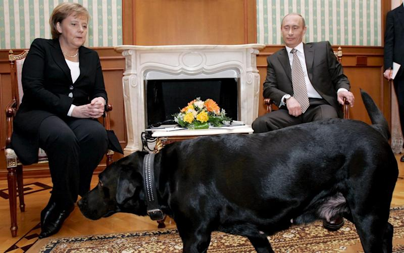 Russian President Vladimir Putin speaking with German Chancellor Angela Merkel...epa00909037 Putin's pet dog Koney walks in the room, where Russian President Vladimir Putin talks to German Chancellor Angela Merkel during their meeting at his residence in Sochi, a Black sea resort, 21 January 2007. Angela Merkel arrived in Russia on a one-day working visit. EPA/DMITRY ASTAKHOV PRESIDENTIAL PRESS SERVICE/ITAR-TASS POOL - DMITRY ASTAKHOV/EPA