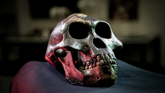 Cast of the skull of Lucy the australopith <em>Australopithecus afarensis</em> from Ethiopia.
