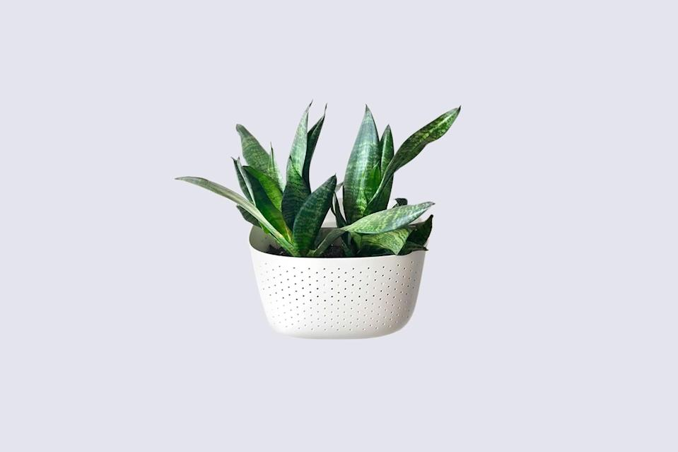 "<p>The only thing better than a beautiful plant display on a tiny balcony is one that doesn't take up any precious square footage. ""Wall-mounted planters are a great way to store plants and liven up a balcony, but also save the much-needed floor space,"" Lisac explains.</p> <p><strong><em>Shop Now: </em></strong><em>Wally Eco Vertical Garden Wall Planter in White, $29.99, </em><a href=""https://wallygro.com/products/living-wall-planter-white"" rel=""nofollow noopener"" target=""_blank"" data-ylk=""slk:wallygro.com"" class=""link rapid-noclick-resp""><em>wallygro.com</em></a><em>.</em></p>"