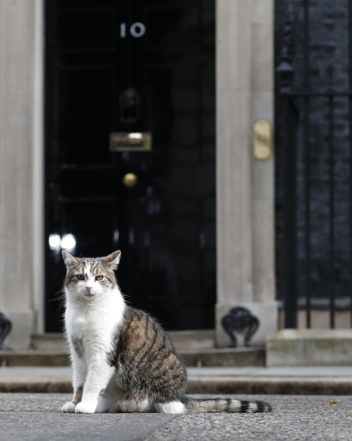 Larry the Cat, Downing Street's 'chief mouser', outside No. 10. (AP)