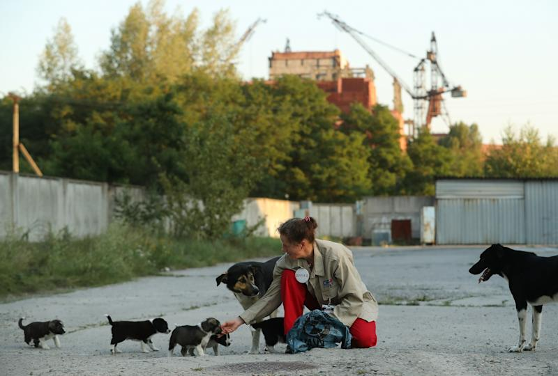 Marie-Louise Chenery, who is from San Diego, California, and is a volunteer with the Dogs of Chernobyl initiative, tends to stray puppies near the Chernobyl nuclear power plant as the abandoned construction site of reactors five and six stands behind on August 17, 2017.