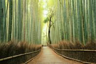 <p>This bright green bamboo grove will transport you to a magical world. It's located in Kyoto, Japan.</p>