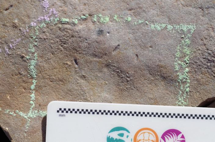 These are Ikaria wariootia impressions in stone. (SWNS)