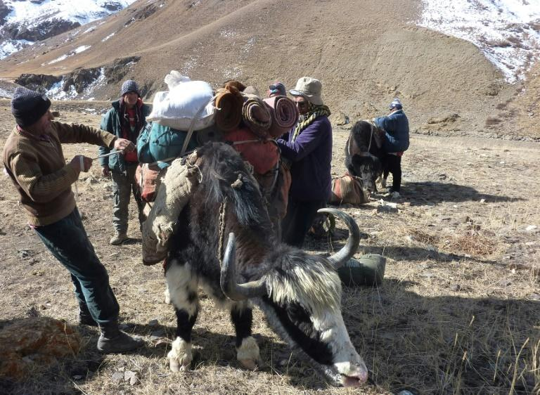 Traders from Pakistan's northern Hunza valley load their luggage on yaks brought from the Wakhan Corridor in northern Afghanistan