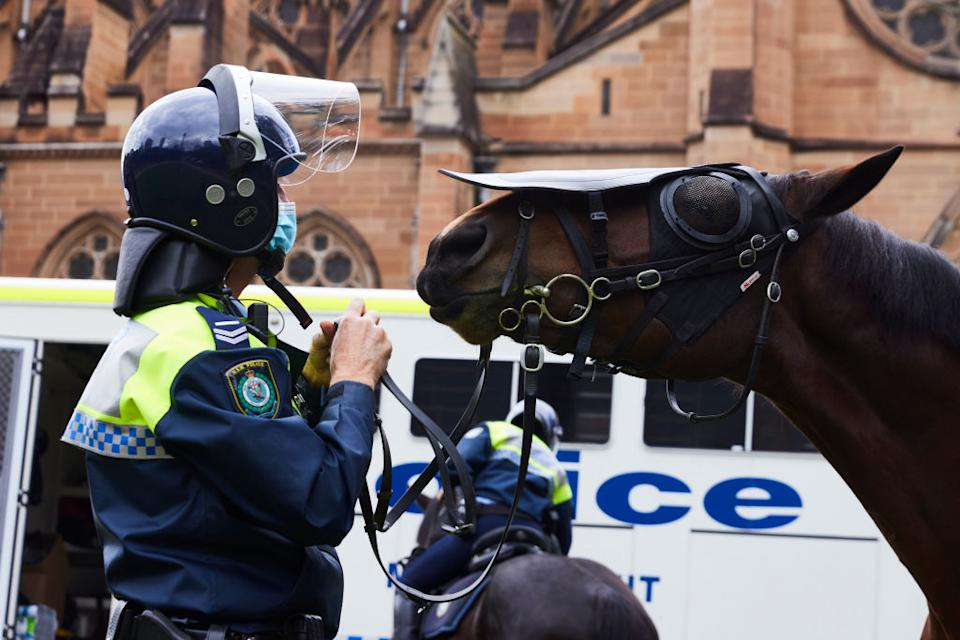 Police horse Tobruk, of the Mounted Unit of NSW Police Force is seen on patrol in Hyde Park.