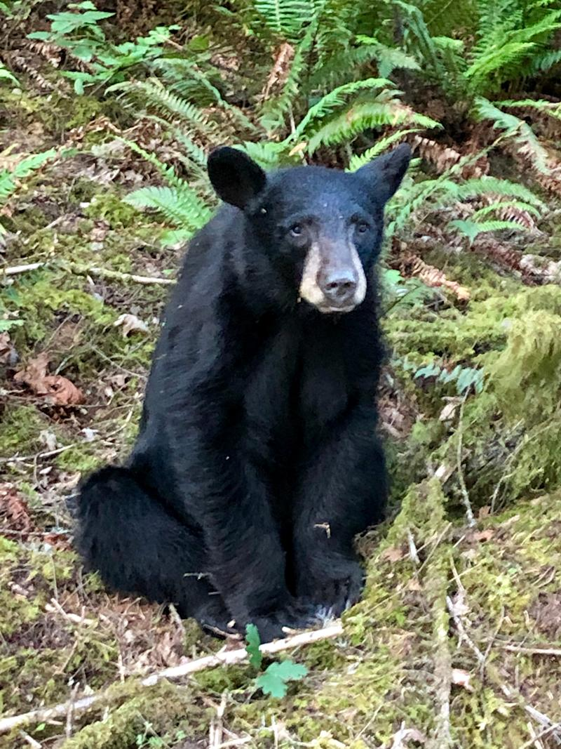 A 100 lb male black bear was shot by the Oregon Department of Fish and Wildlife after becoming too habituated to humans