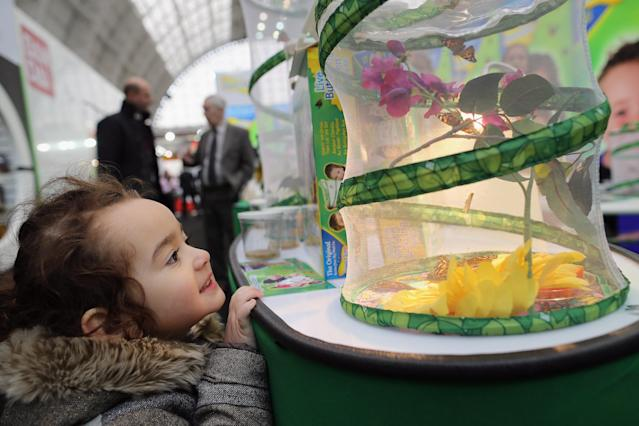 LONDON, ENGLAND - JANUARY 22: Juliet Quispe Palacios, 3, from London looks at a stand with real Butterflies hatching during the 2013 London Toy Fair at Olympia Exhibition Centre on January 22, 2013 in London, England. The annual fair which is organised by the British Toy and Hobby Association, brings together toy manufacturers and retailers from around the world. (Photo by Dan Kitwood/Getty Images)