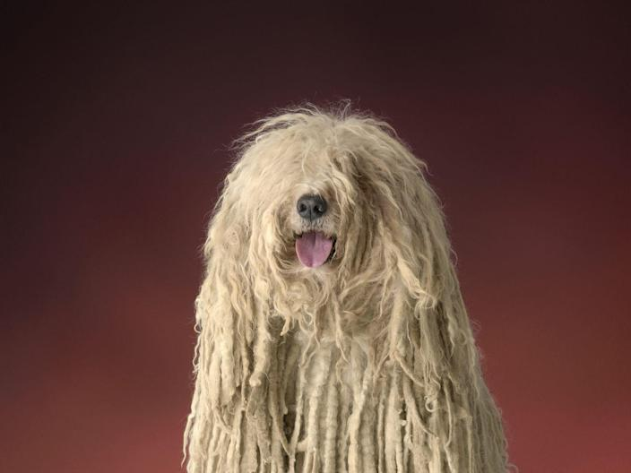 """<p>This dog may look like a walking mess of hair, but Dog Time says these adorably unusual dogs <a href=""""https://dogtime.com/dog-breeds/komondor#/slide/1"""" rel=""""nofollow noopener"""" target=""""_blank"""" data-ylk=""""slk:don't need to be brushed and shed minimally"""" class=""""link rapid-noclick-resp"""">don't need to be brushed and shed minimally</a> (though care should be taken to keep their white fur free of dirt and parasites). Their personalities are a little more high-maintenance than other breeds, but they have a strong protective instinct that makes them an <a href=""""https://www.womansday.com/life/pet-care/g25603698/amazon-dog-gifts-2018/"""" rel=""""nofollow noopener"""" target=""""_blank"""" data-ylk=""""slk:ideal family dog"""" class=""""link rapid-noclick-resp"""">ideal family dog</a>. </p>"""