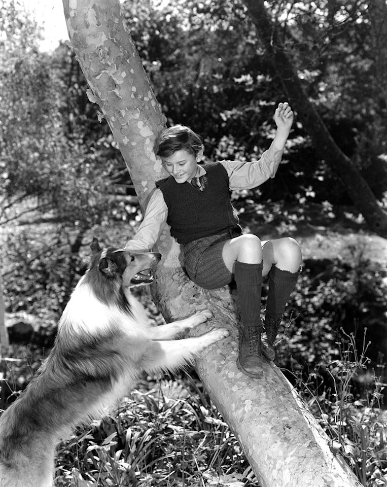 """<a href=""""http://movies.yahoo.com/movie/1800086842/info"""">Lassie Come Home</a> (1943): Maybe it's because I had a collie as a little girl, but I can walk into this movie at any point and find tears streaming down my face within seconds. It's a classic, of course, featuring a young Roddy McDowell and Elizabeth Taylor (and it was remade pretty faithfully a few years ago with Peter O'Toole and Samantha Morton). No, """"Lassie"""" is not realistic. The dog is possessed of such preternatural navigational skills, she can find her way from Scotland to Yorkshire on her own, despite the many obstacles and threats along the way. But when she arrives back home and young Joe Carraclough sees her again for the first time ... wow. Manipulative, yes, but effective."""