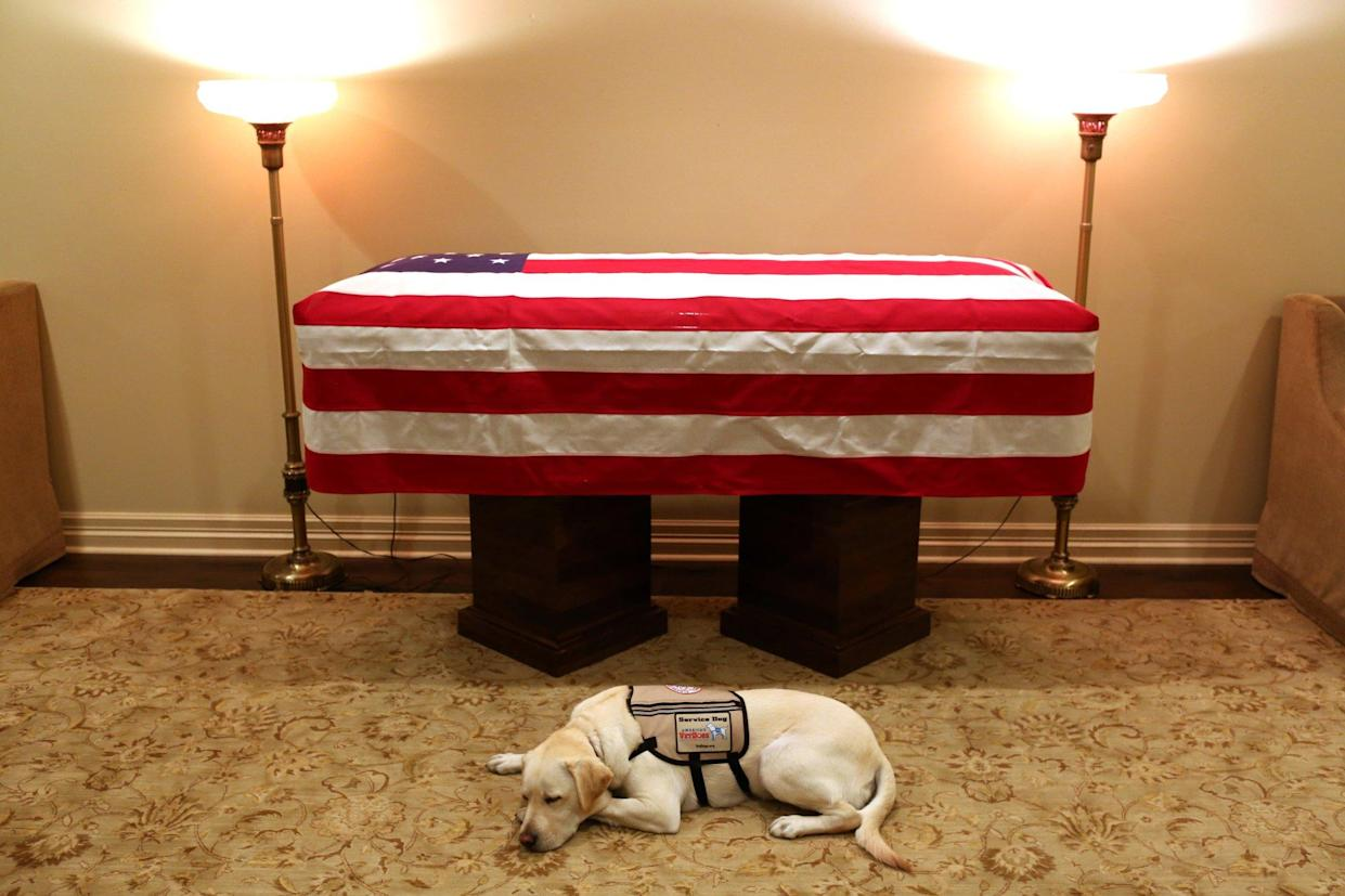 Sully, the service dog of former U.S. President George H.W. Bush in his final months, lays in front of Bush's casket at the George H. Lewis & Sons funeral home in Houston, Texas, U.S., December 3, 2018. (Photo: Courtesy Office of George H. W. Bush-Evan Sisley/Handout via Reuters)