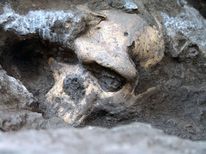 This 2005 photo provided by the journal Science shows a pre-human skull found in the ground at the medieval village Dmanisi, Georgia. The discovery of the estimated 1.8-million-year-old skull of a human ancestor captures early human evolution on the move in a vivid snapshot and indicates our family tree may have fewer branches than originally thought, scientists say. It is the most complete ancient hominid skull found to date, as well as the earliest evidence of human ancestors moving out of Africa and spreading north to the rest of the world. (AP Photo/Courtesy of Georgia National Museum)