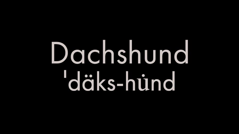 How to pronounce dachshund