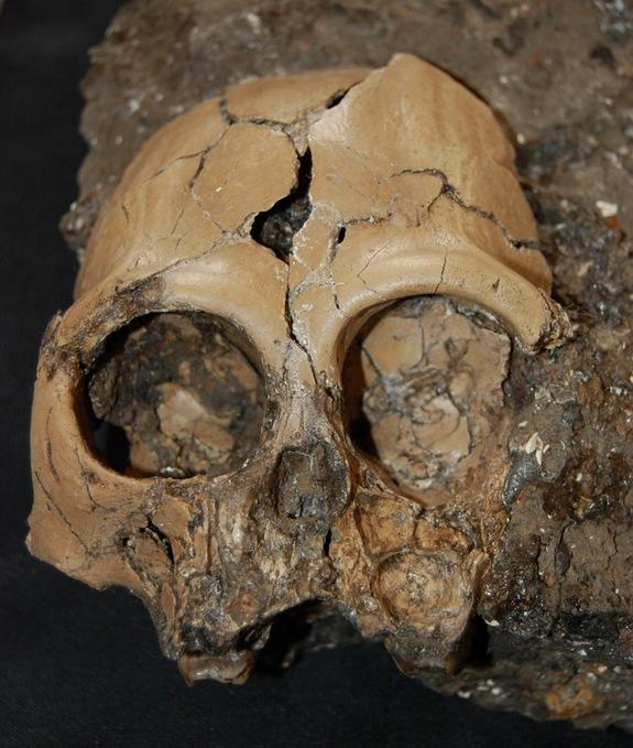 Rare 6-Million-Year-Old Skull of Juvenile Ape Discovered