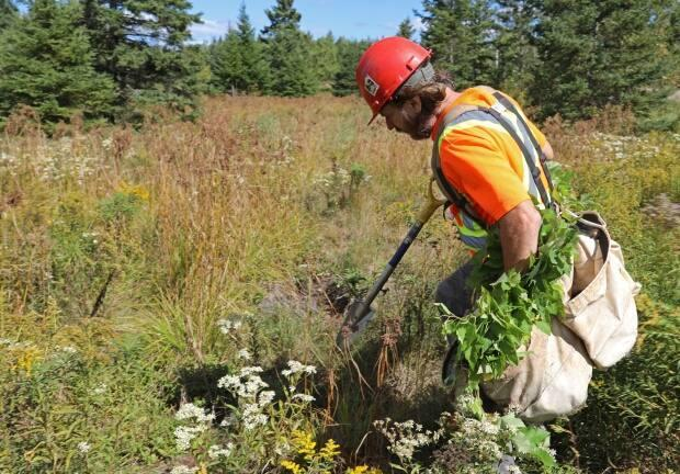 Jonathan Clark said his environmental company planted 10 thousand trees in New Brunswick in 2020.  (Submitted by Jonathan Clark - image credit)