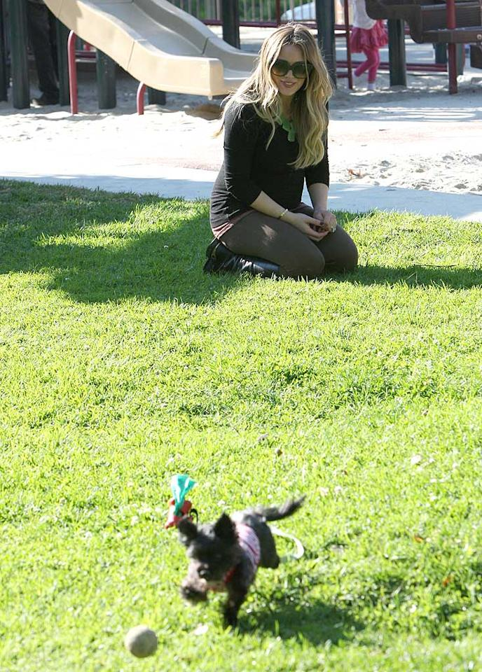 Hilary Duff tossed the ball around with one of her five -- yes five -- dogs at a Los Angeles park in January. The brood of pups will be getting a human sibling soon when Hilary gives birth to her and hubby Mike Comrie's first child.