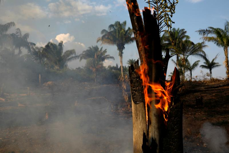 Pope Fears for Amazon Fires, Says the Rainforest is Planet's 'Vital Lung'
