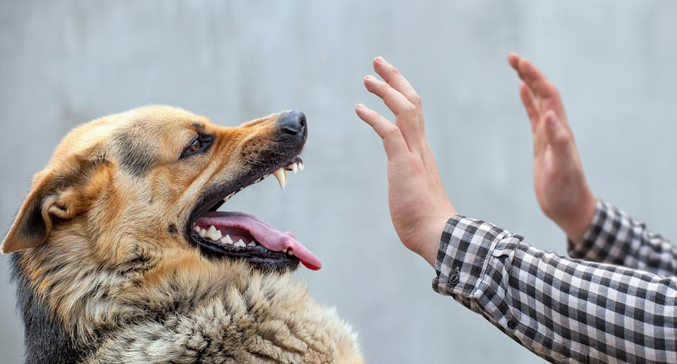 Dogs are just like humans and can experience a range of emotions. Source: Getty Images