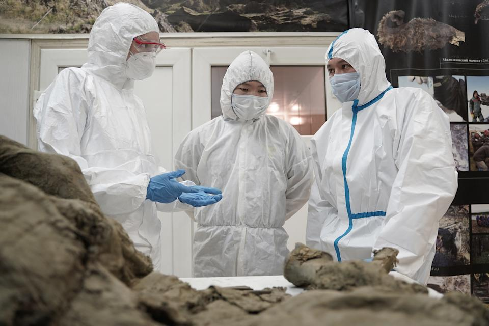 Vector expert and Mammoth Museum employees take the samples of Verkhoyansk horse, found in 2009 in Batagay crater. The horse is 4,500-years-old. Source: Siberian Times/Australscope