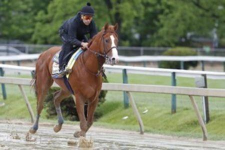 Kentucky Derby Winner Justify Is Favored To Win Soggy Preakness