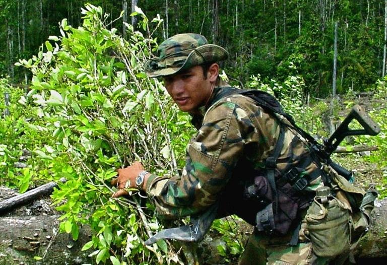 A Colombian anti-narcotics soldier removes bushes of coca leaf in Barbacoas, southern Colombia, in 2001