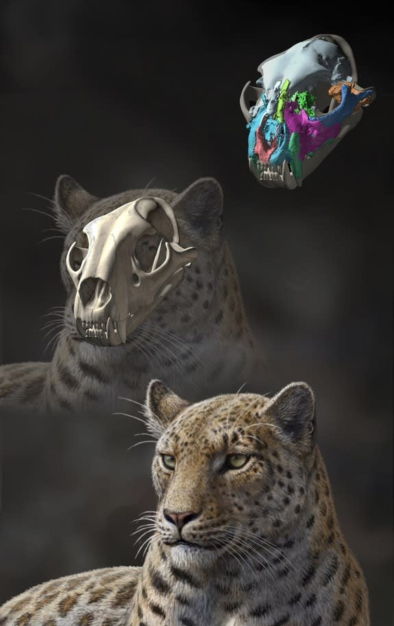 Oldest Big Cat Fossils Discovered in Tibet