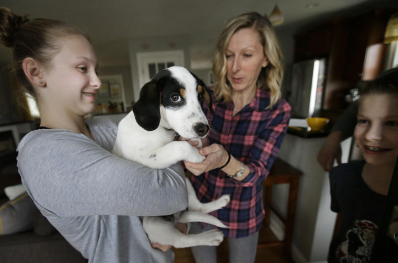 In this Wednesday, March 29, 2017 photo Morgan Fredette, 13, left, holds the family dog Roscoe as her mother Kate, center right, and brother Lucas, 11, right, play with the dog at their home in Waltham, Mass. The family found the dog through the online platform How I Met My Dog, that is designed to help humans pick the most compatible mutt possible. (AP Photo/Steven Senne)