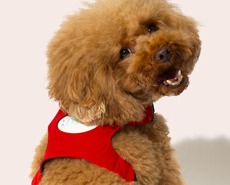 The vest displays colour-coded indicators of your dog's emotions (Langualess)
